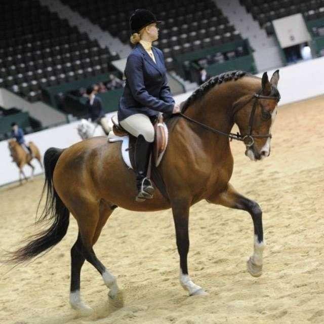 Tranquility Horsemanship