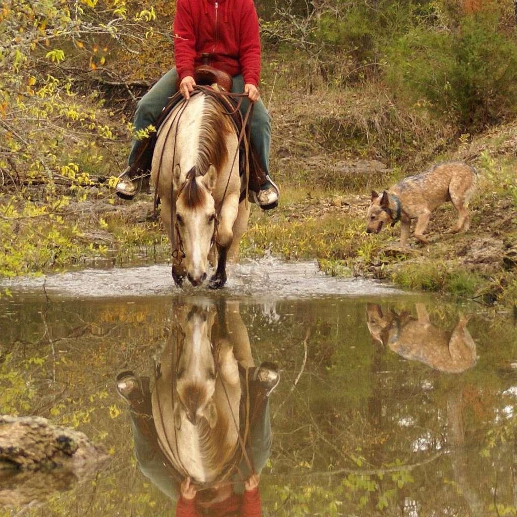JNP HORSES