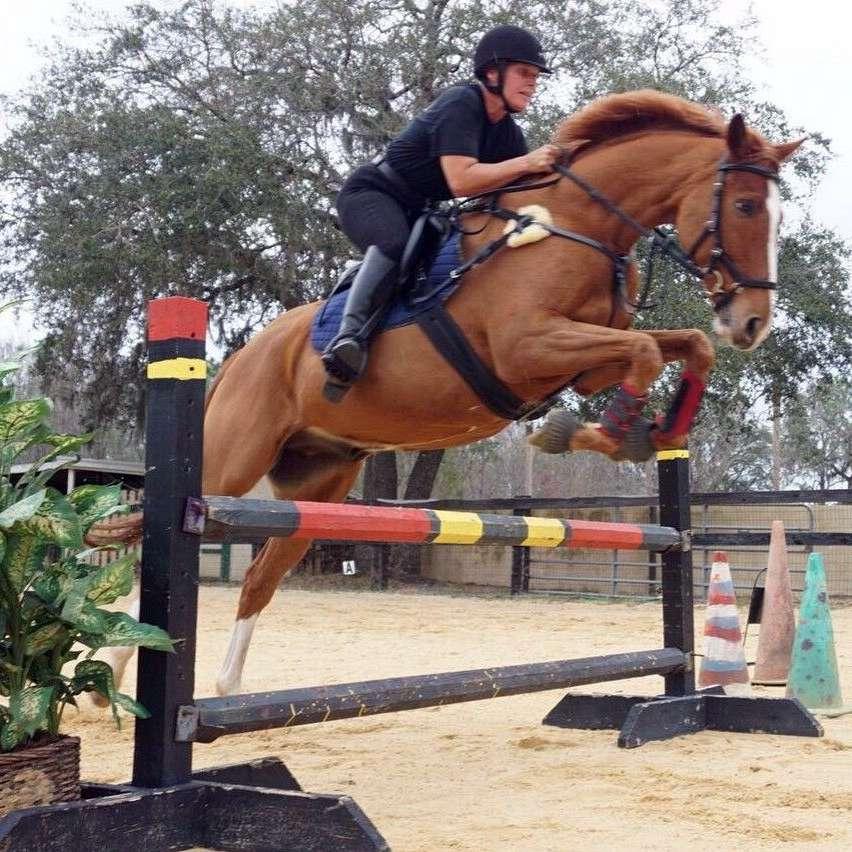 Mainstone Riding Academy