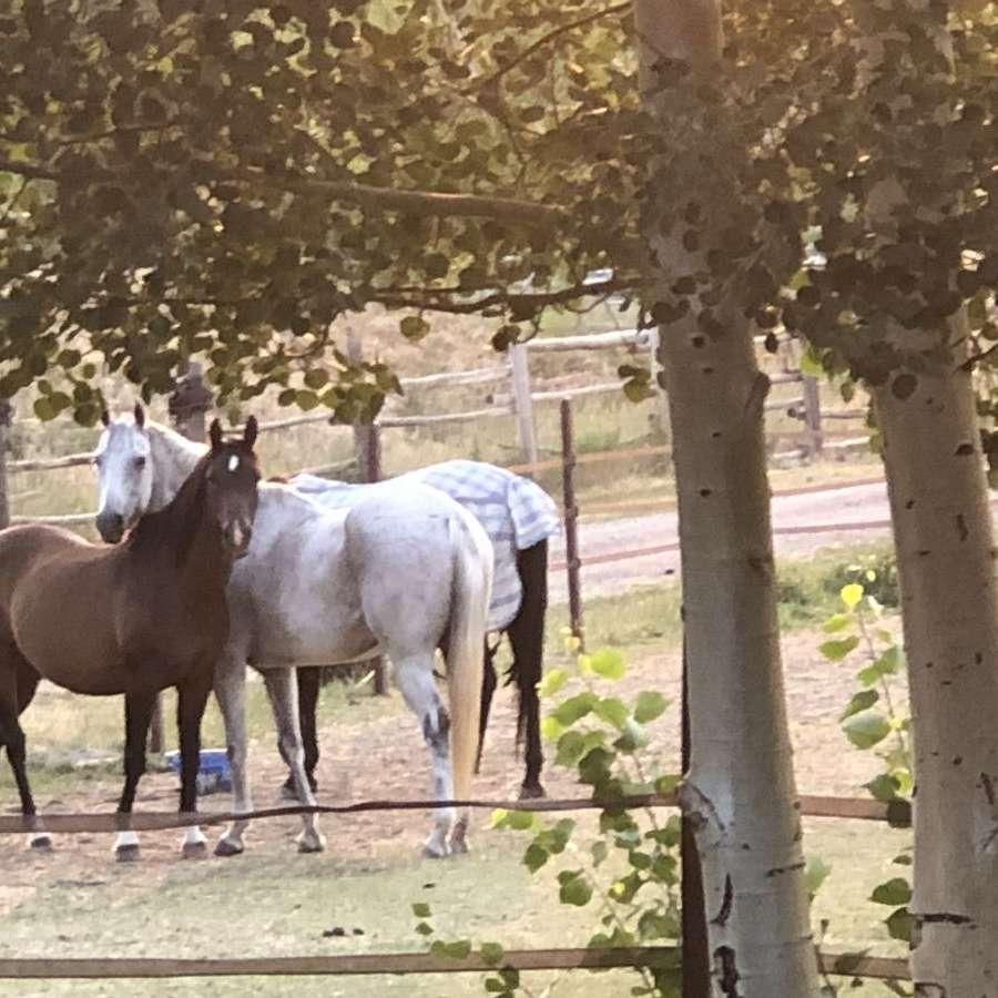 Ascent Equestrian Inc.
