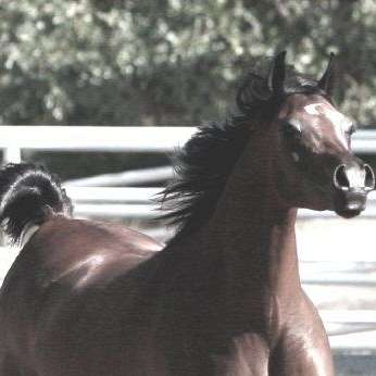 Loradah Arabians HRR
