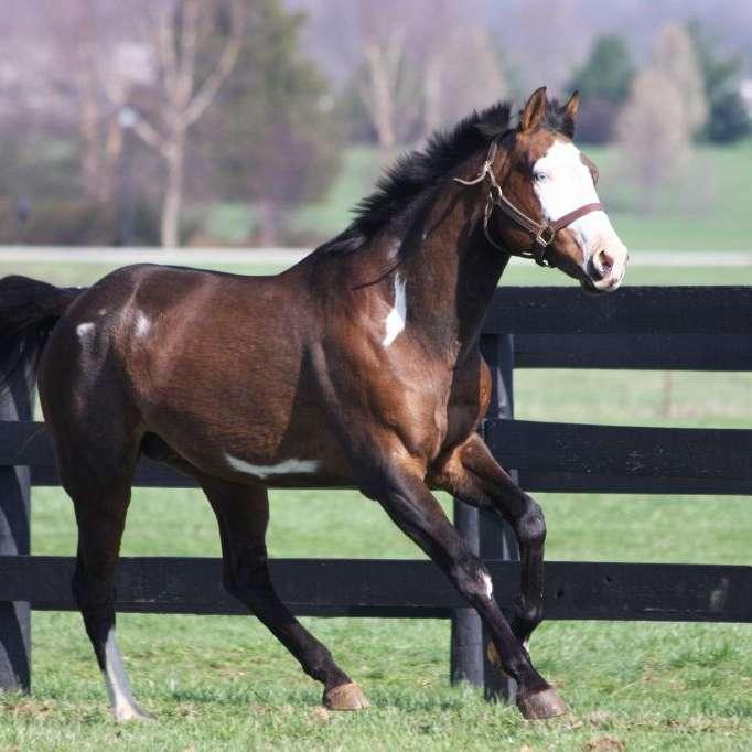 Echo Hill Sporthorses
