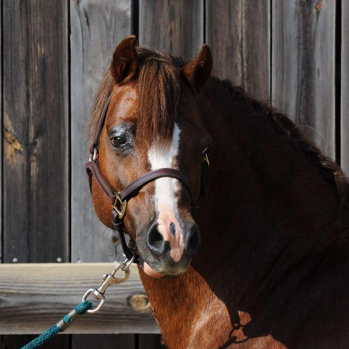 Maye Show Ponies