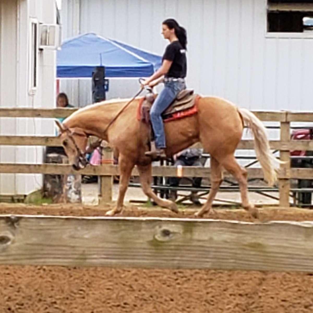 Sunshine equine stables