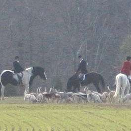 Virginia Sport Horses