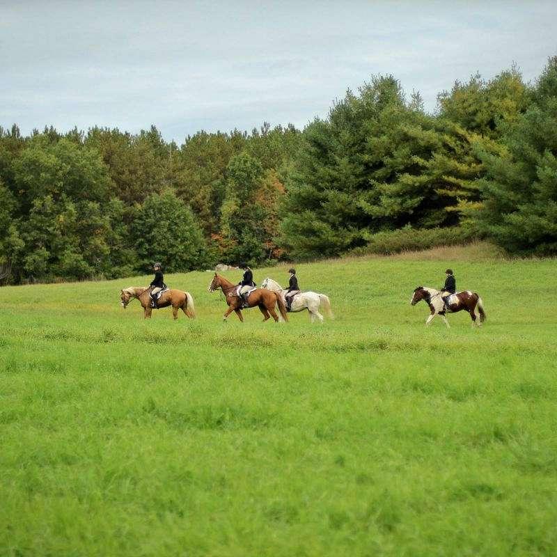 Gunstock Hill Farm