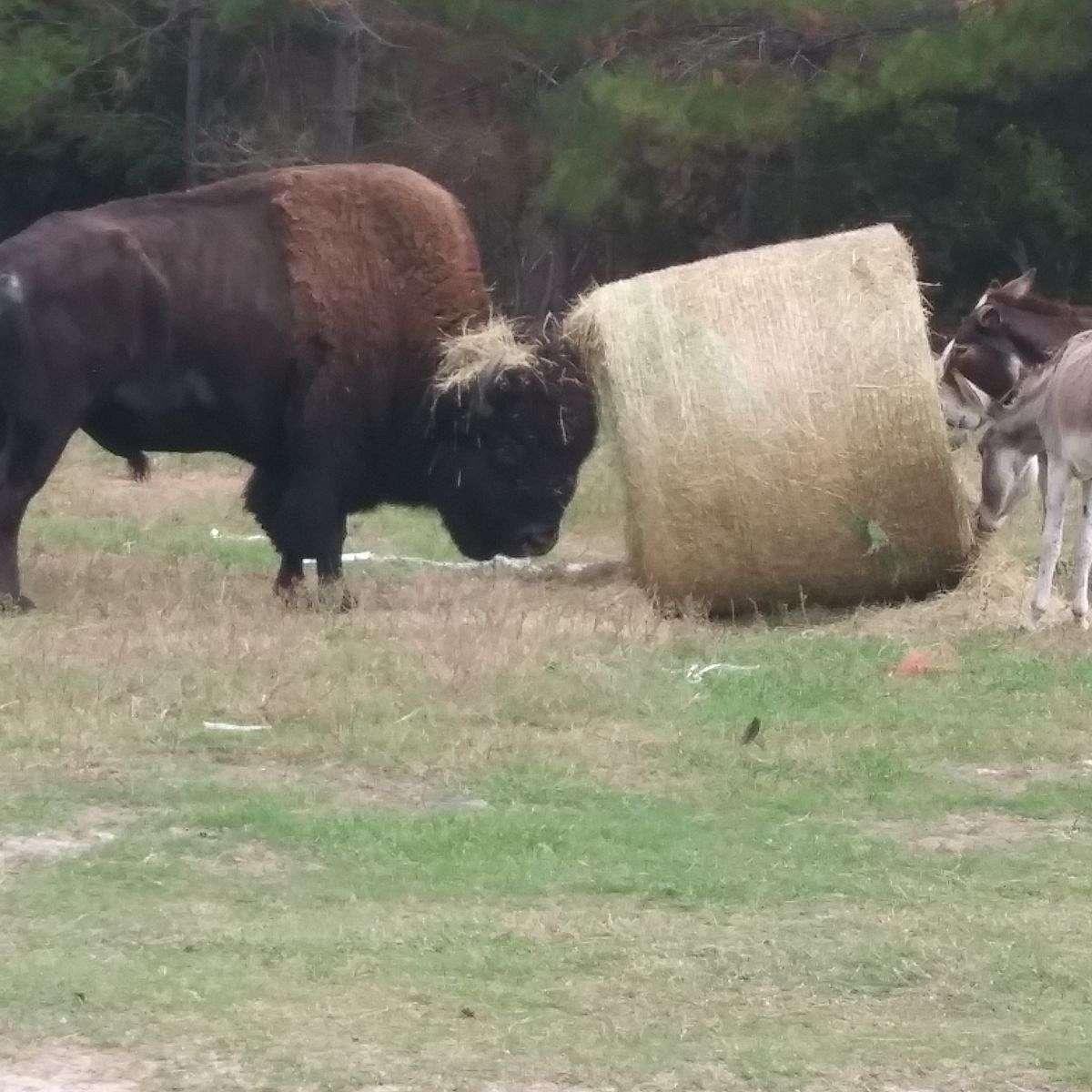 Big E's Livestock