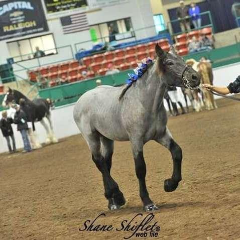 Big Butts  Equestrian