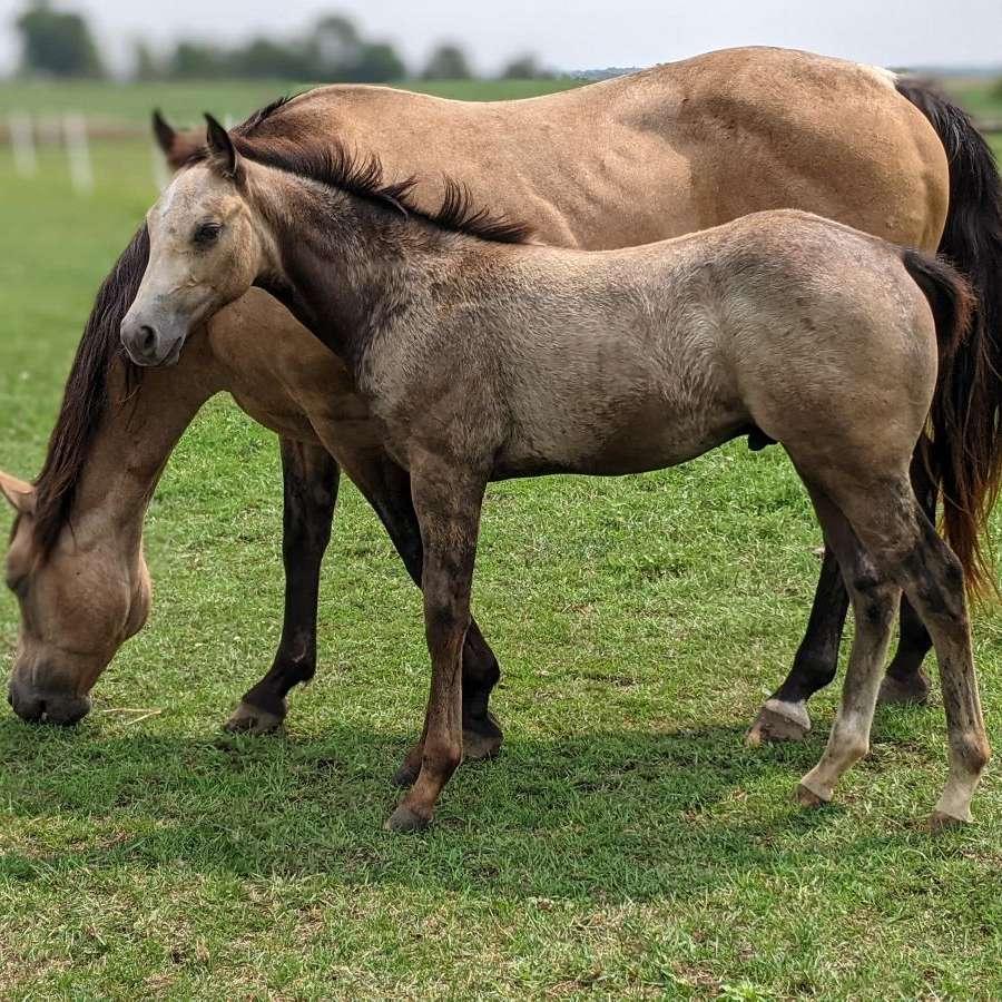 J  J Quarter Horses