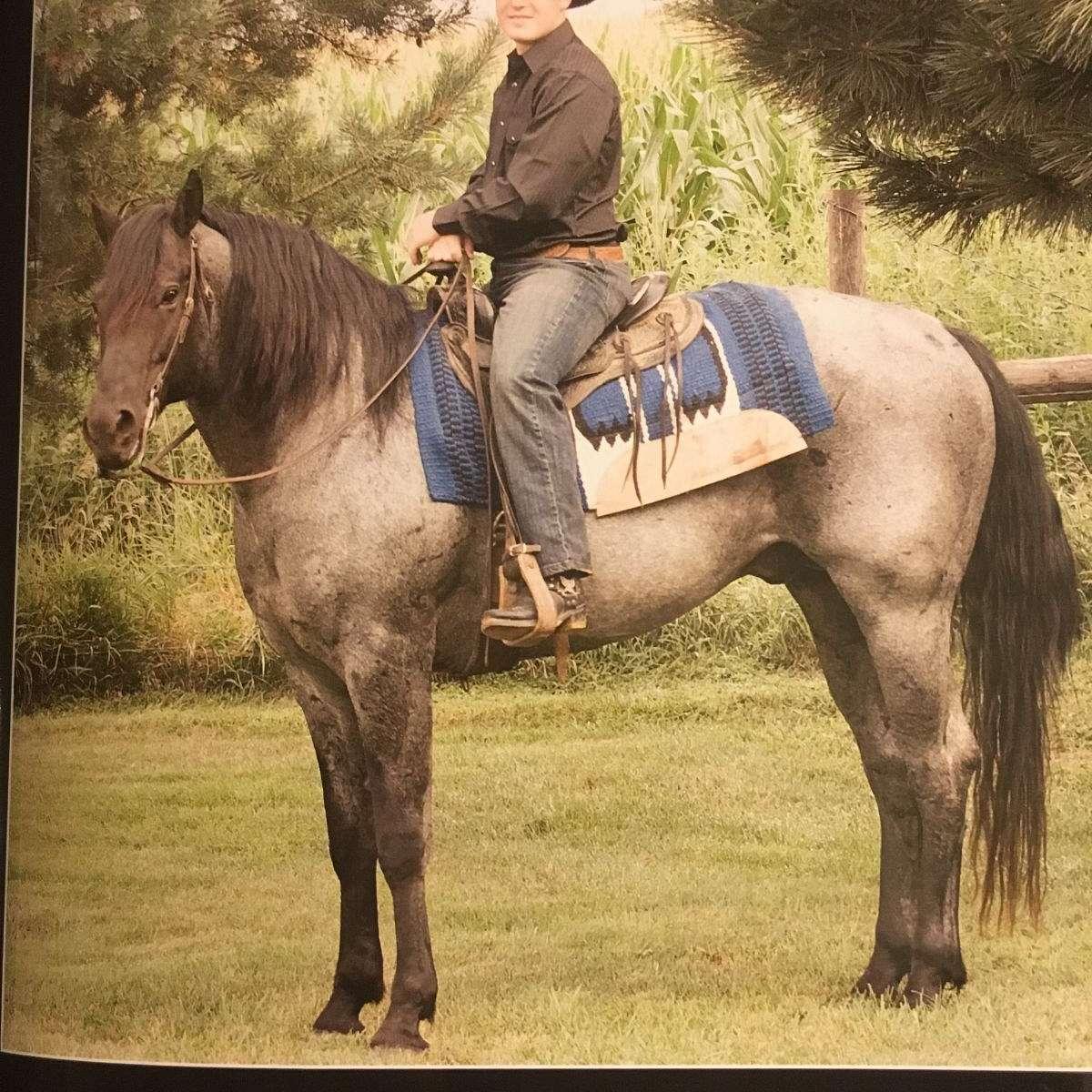 B and B Quarter Horses