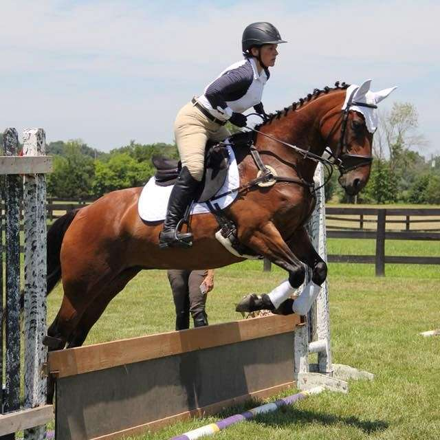 Cavalry Forge Sporthorses