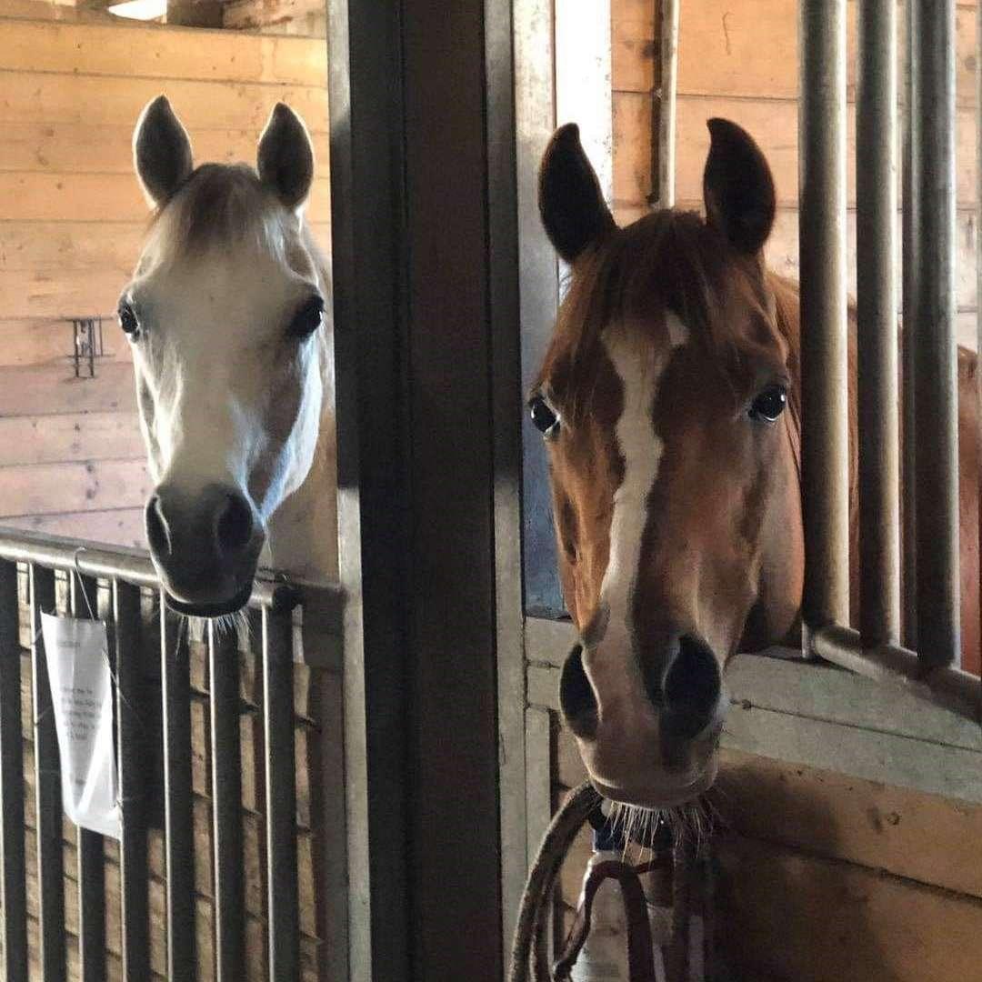 Arabian Horse Rescue  Education