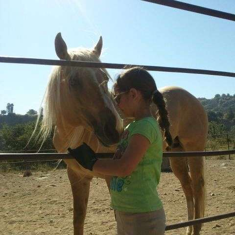 Equestrians Excellence LLC