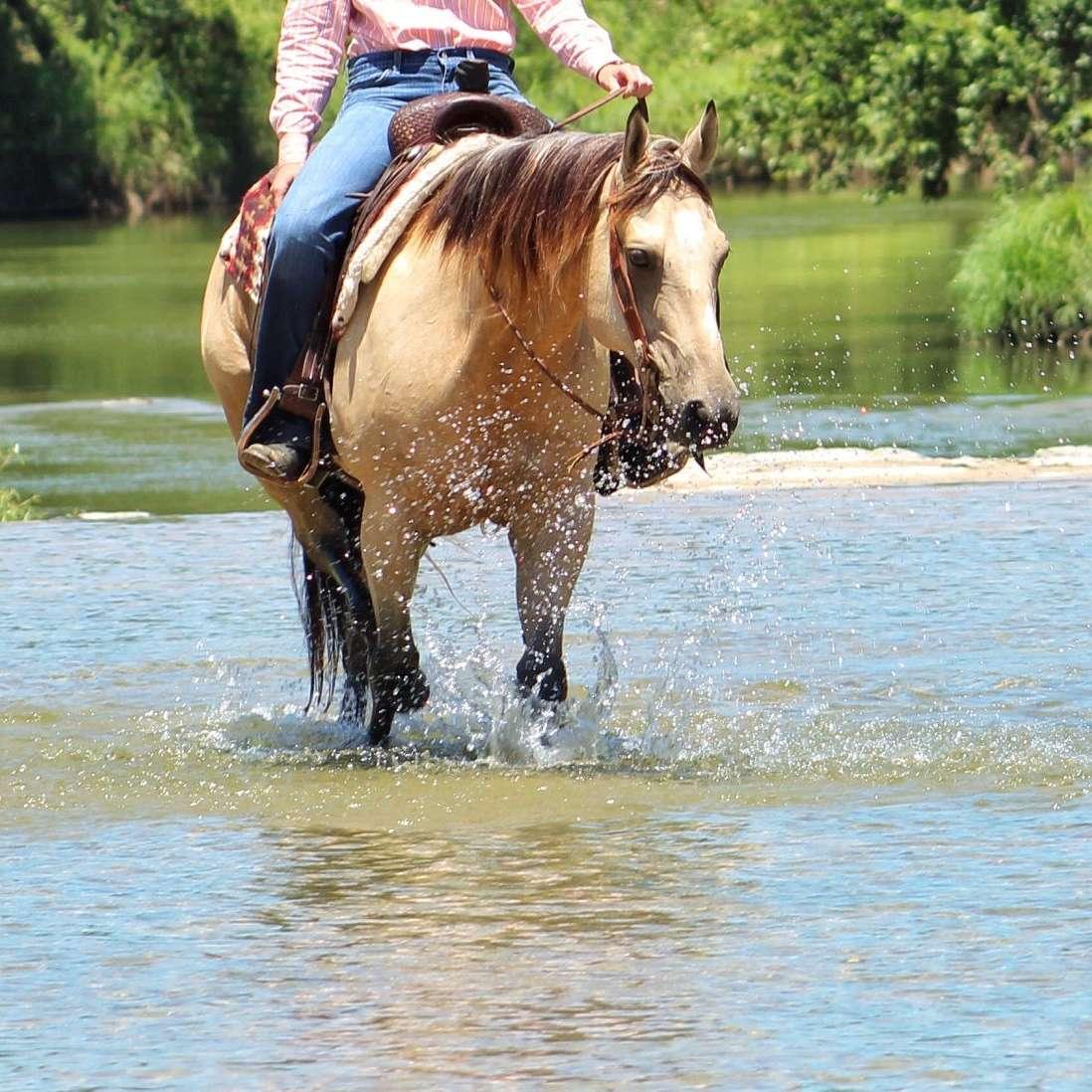 C Fork Horses