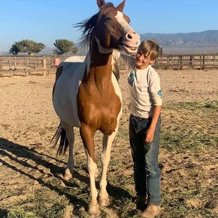 A to Z Equestrian  Livestock