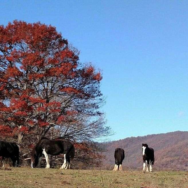 Cross Creek Farm LLC
