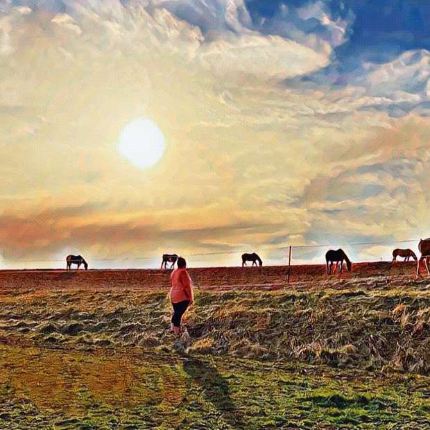 FEASGAR FARMS SPORTHORSES