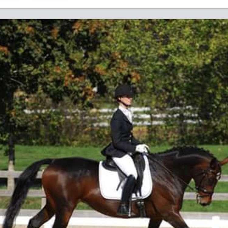 Rivercity Sport Horses