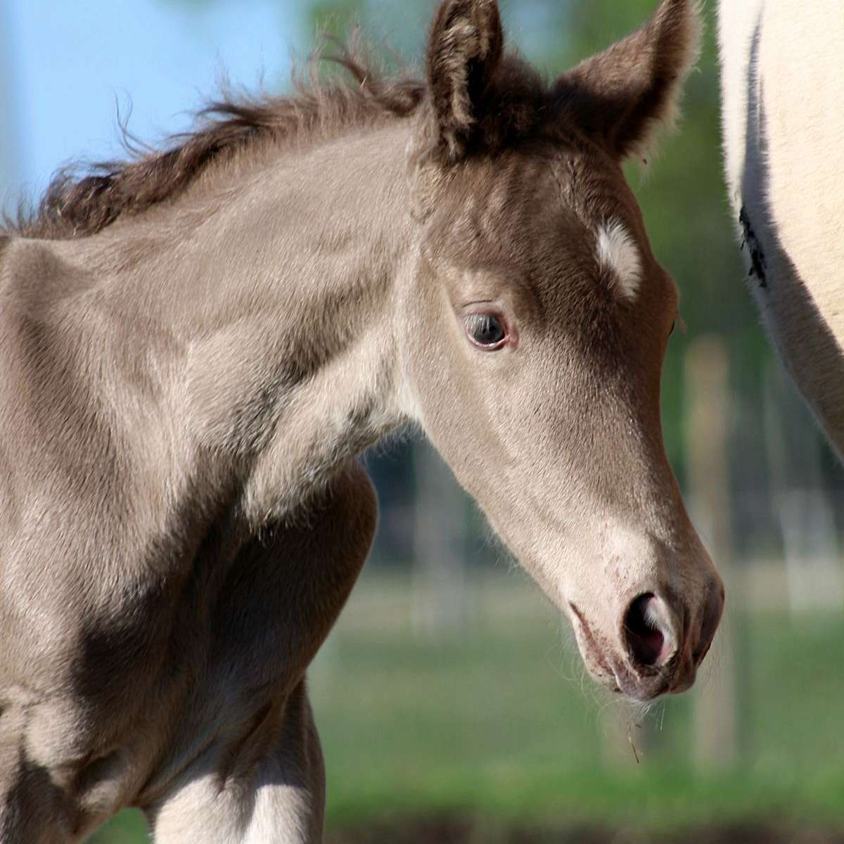 Gold Dust Equine