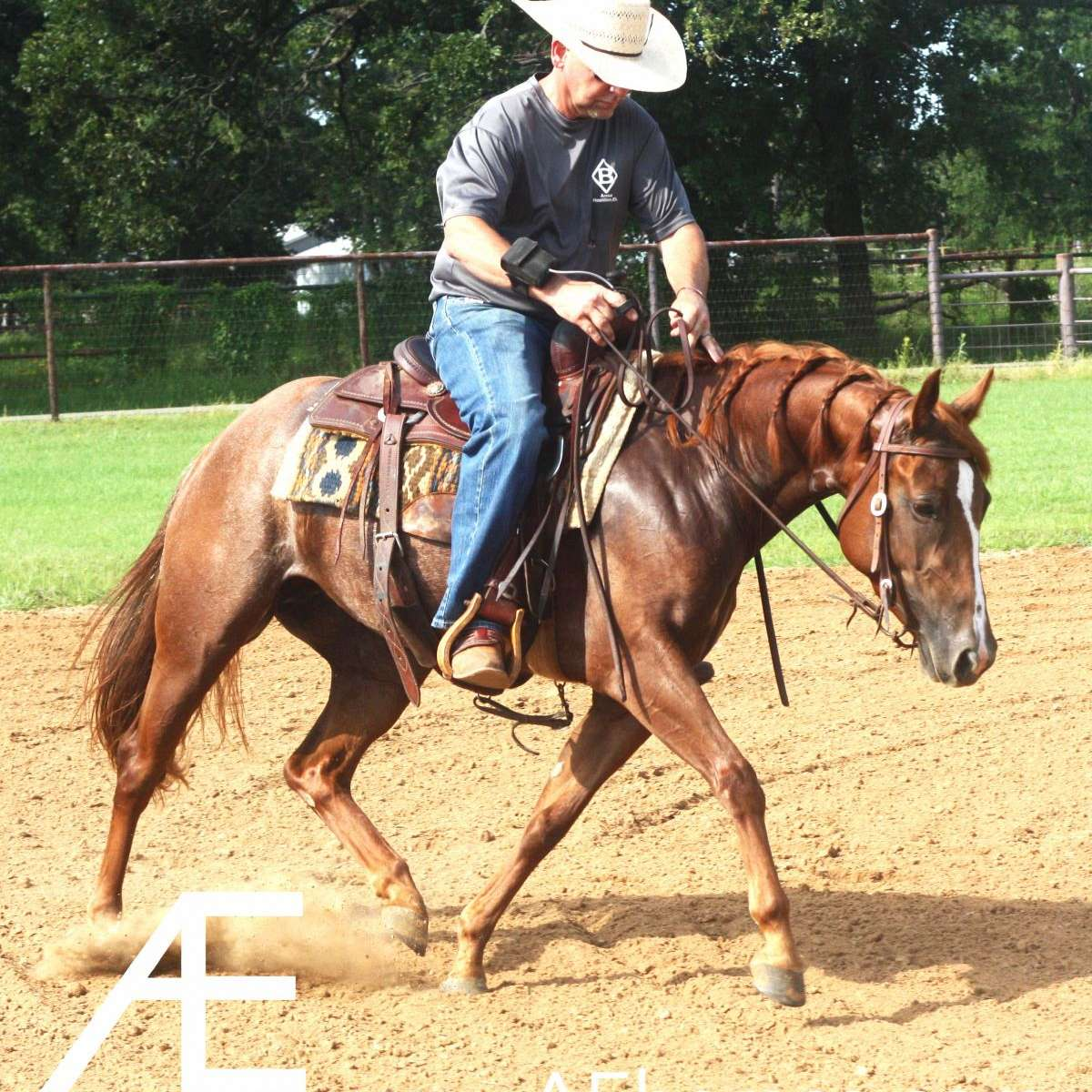 AE Performance Horses
