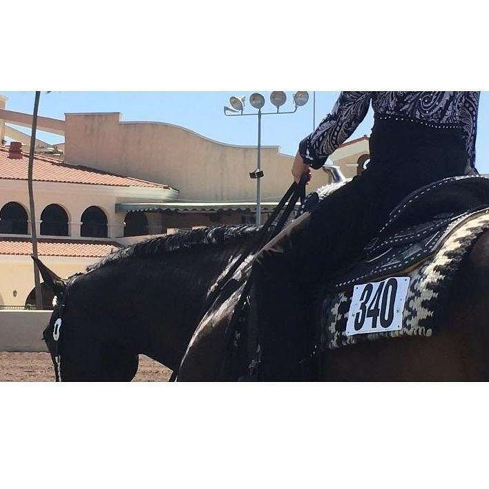 Broken Arrow Performance Horses