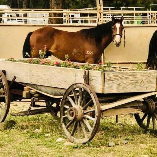 Done Roaming Ranch