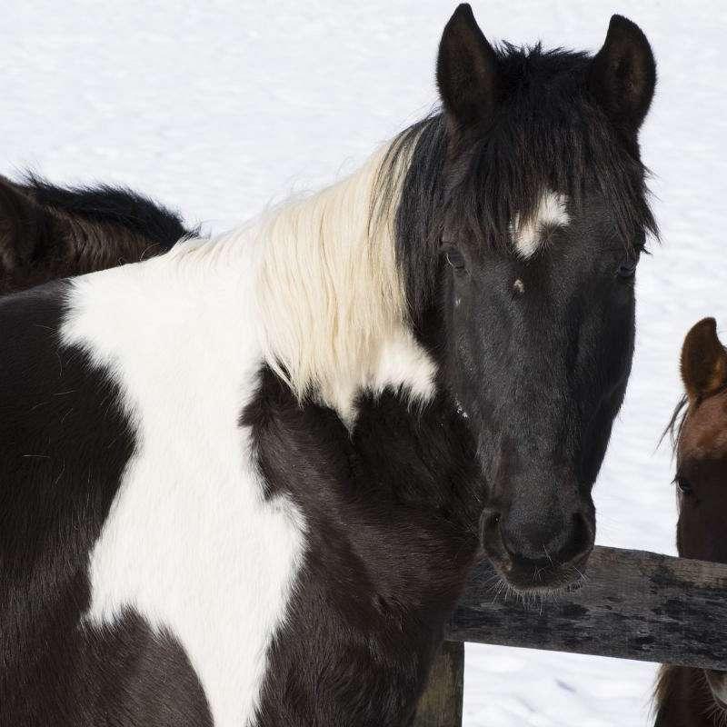 Lifeline Horse Rescue and Rehabilitation Inc.