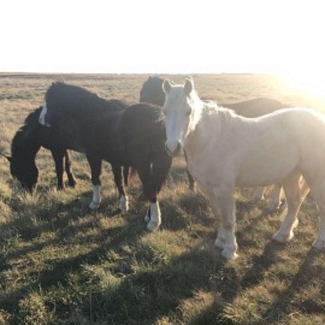 C Armr Ponies