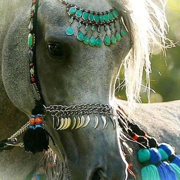 Imtal Egyptian Arabians