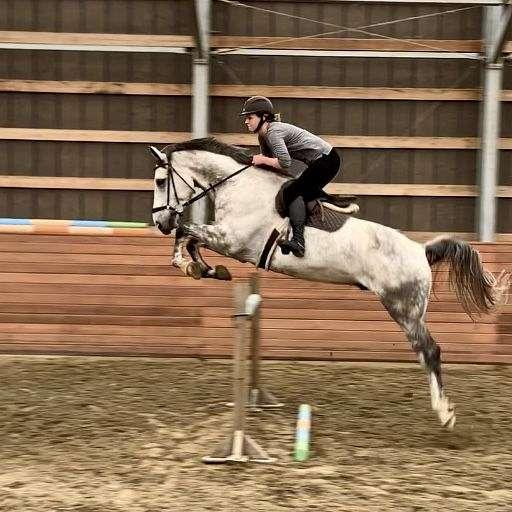 Hutter Sport Horses Auctions