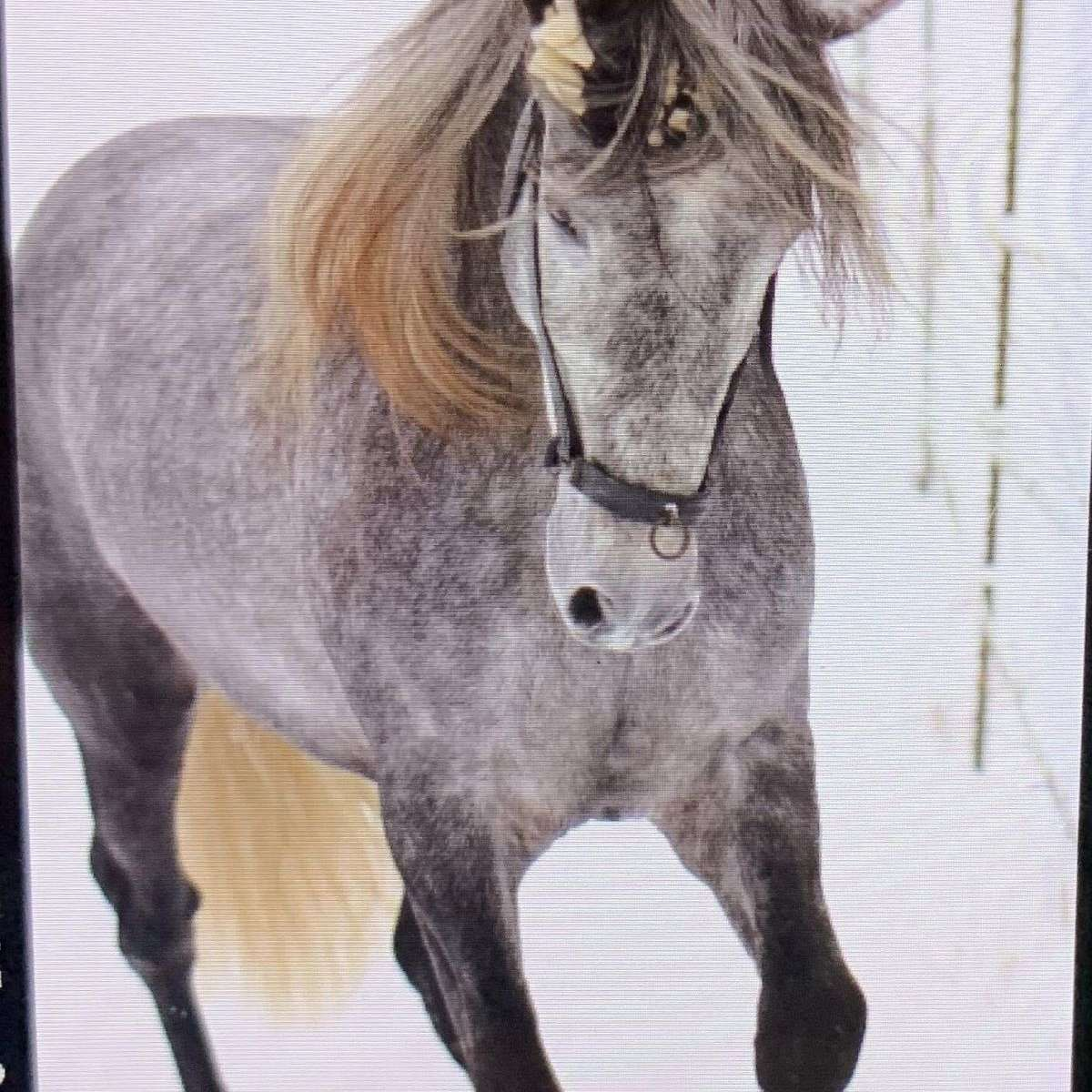 Adamczyk Andalusians