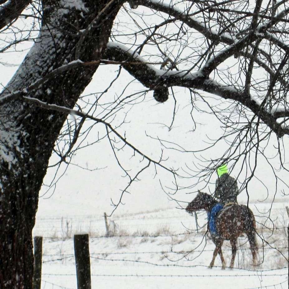 Windy Creek Quarter Horses