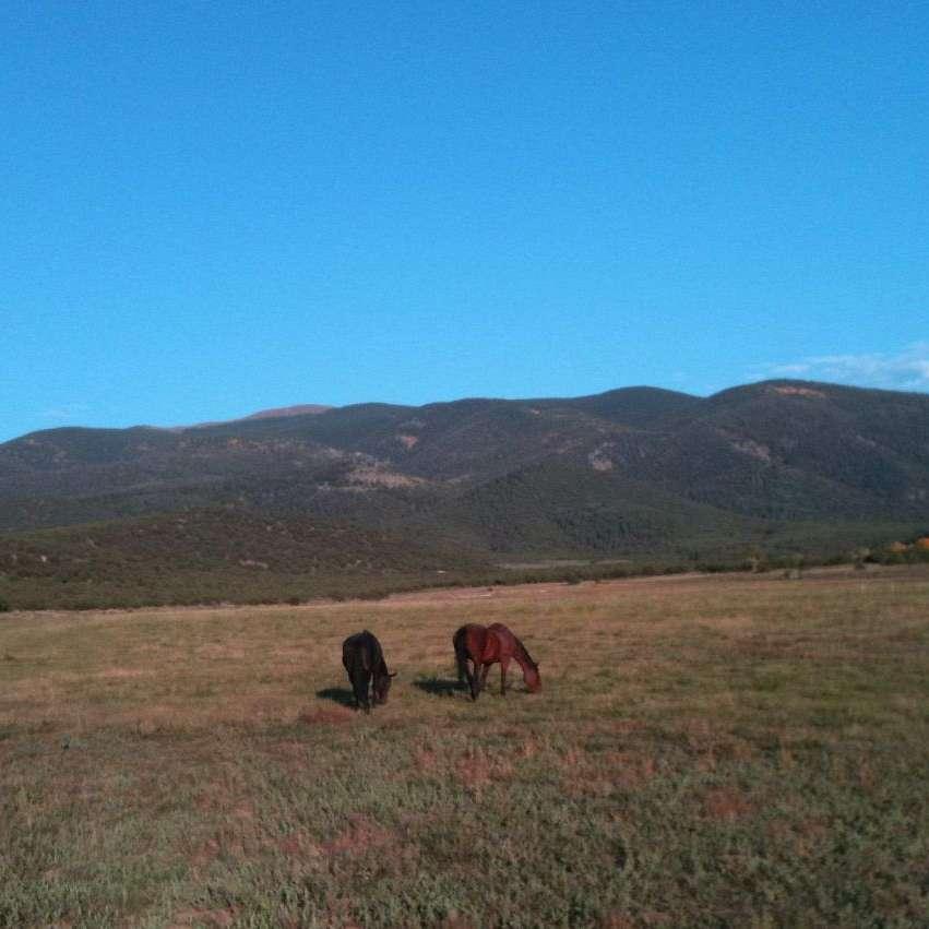Ute Creek Equine