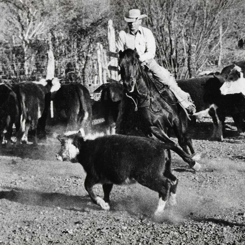 Stoner Ranch Quarter Horses