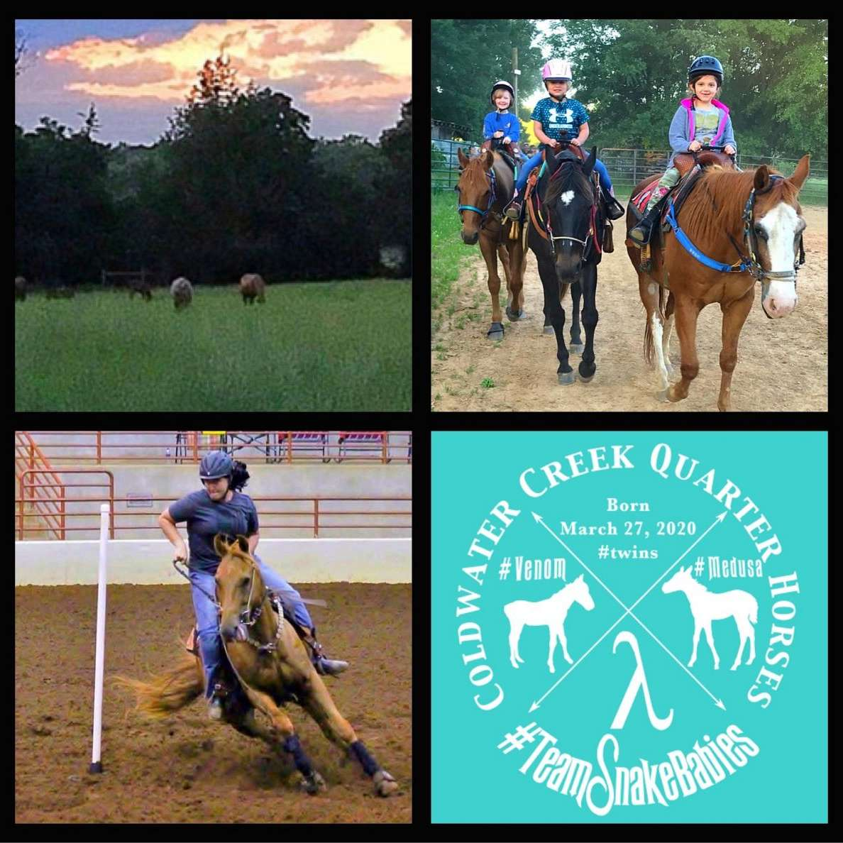 Coldwater Creek Quarter Horses