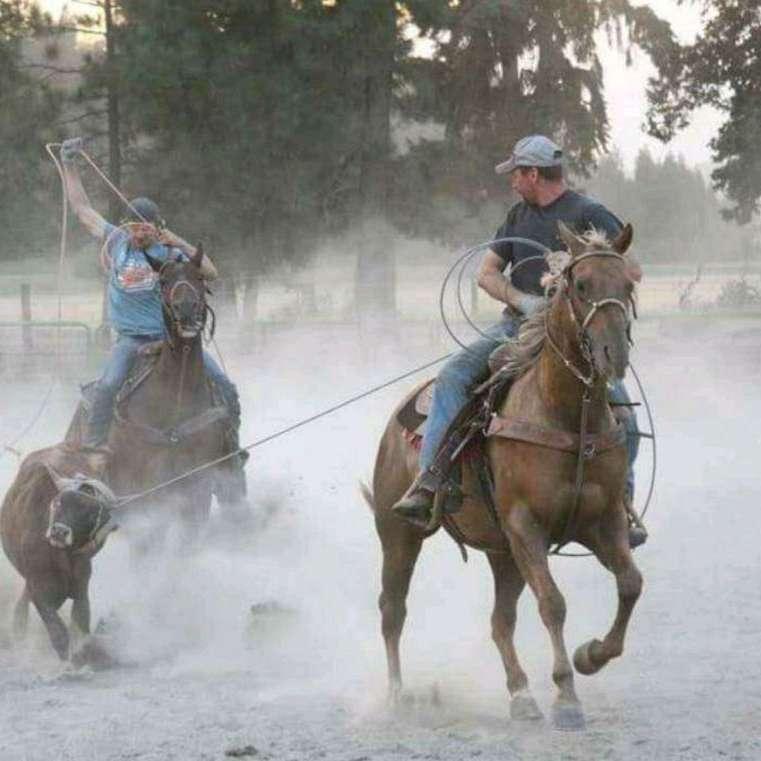 4k Ranch  Performance Horses