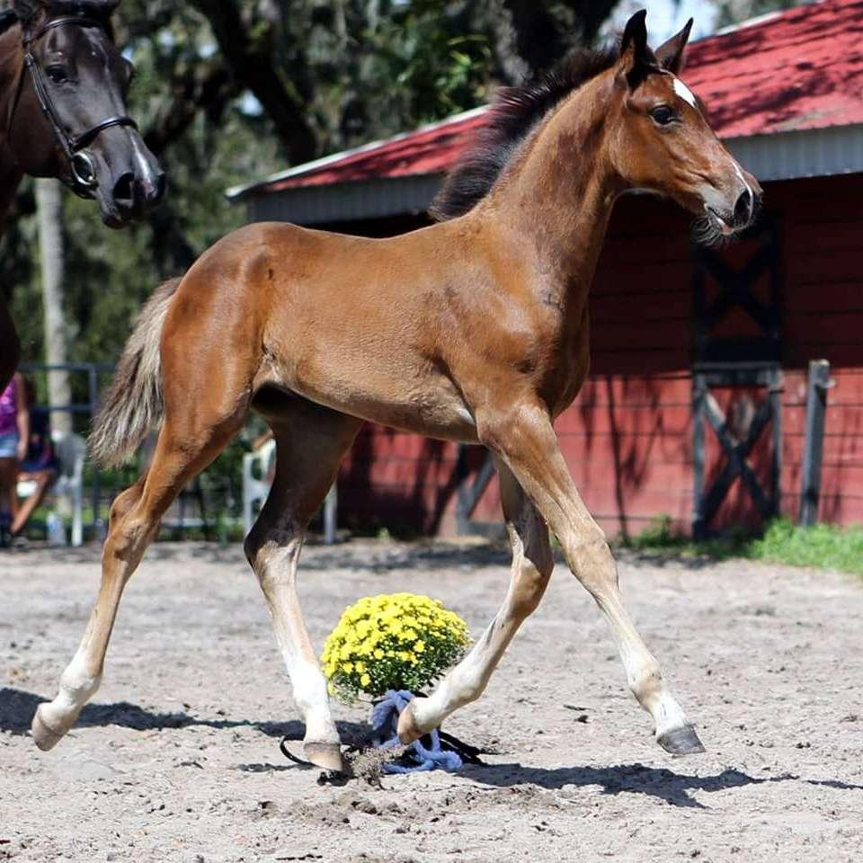Exquisite Sport Horses