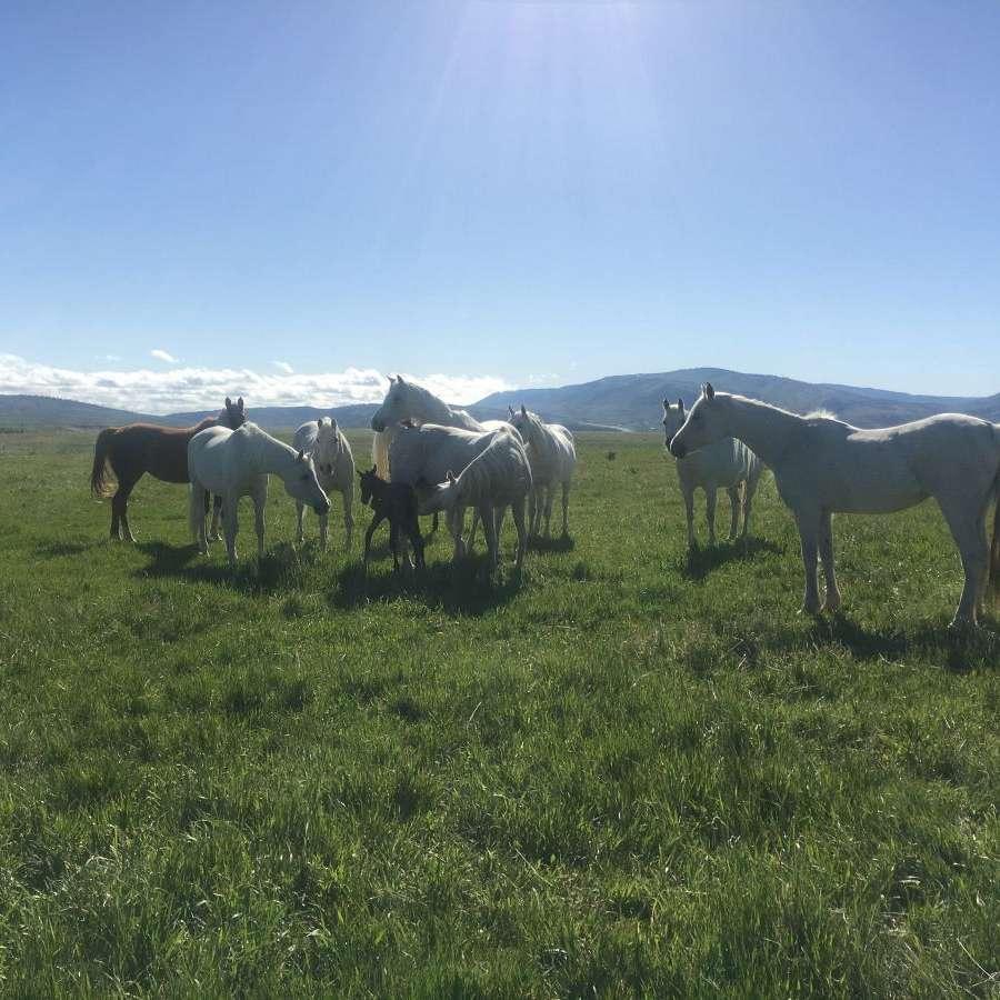 Hiser Farms