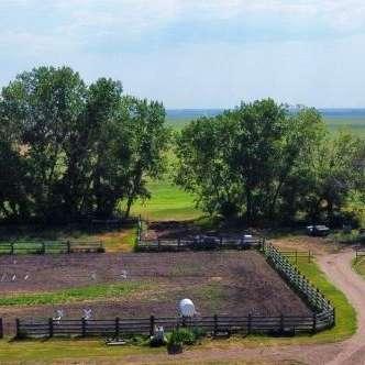Black Poplar Equine
