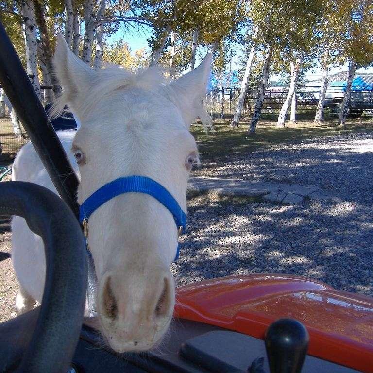 Spring Creek Horse Rescue