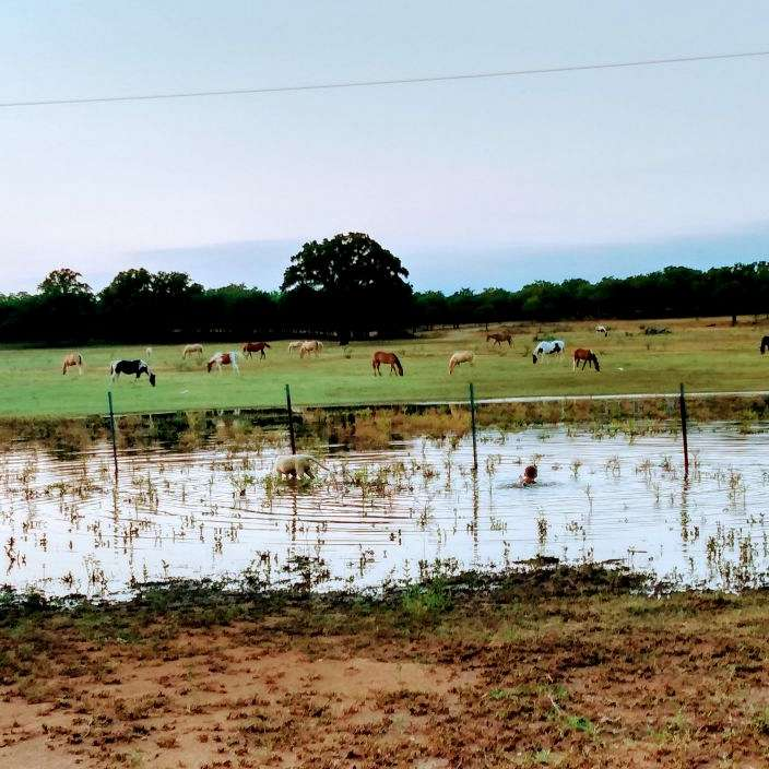 Hardman Land  Livestock