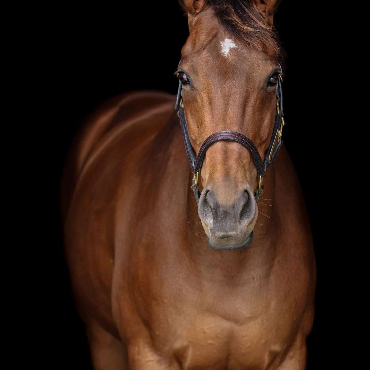 Annie's Thoroughbreds and Sporthorses