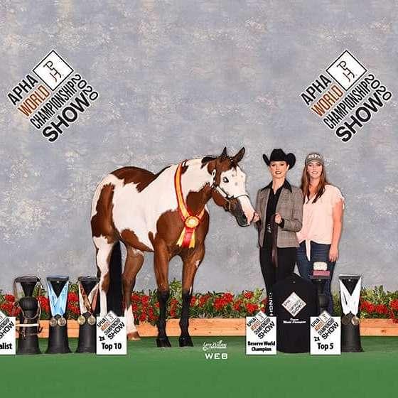 Superior Show Horses