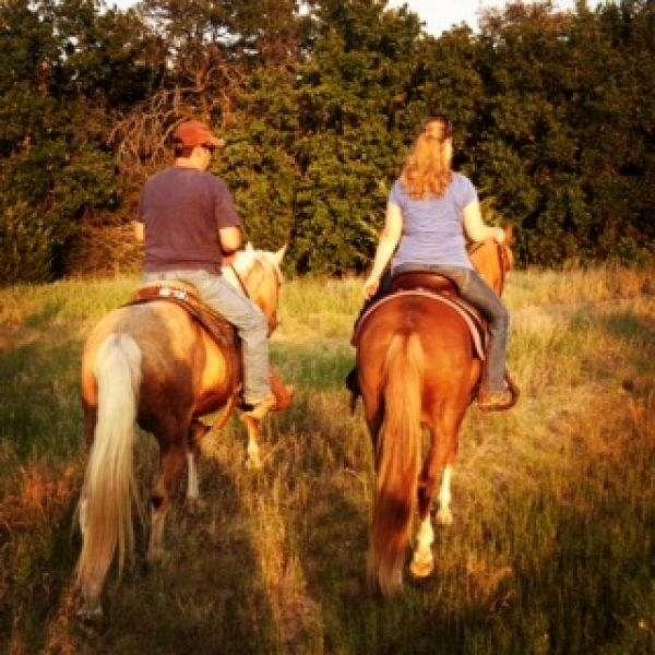 R  B  GAITED HORSES