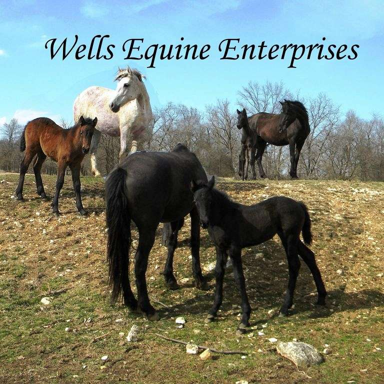 Wells Equine Enterprises