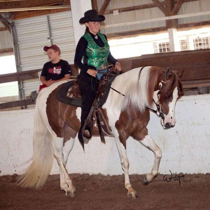 TajLaurel Arabians and Pintos