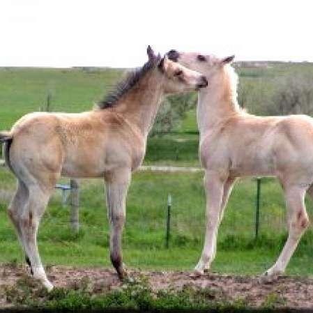 Bar JT Quarter Horses