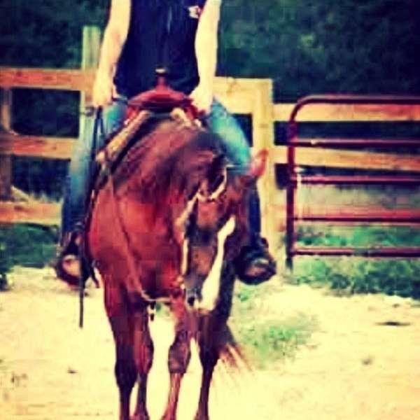 SM Performance Horses
