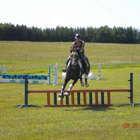 Clarks Lake Percherons & Sporthorses