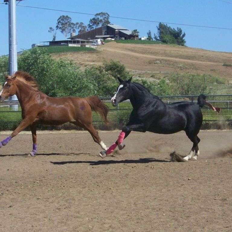 DH Performance Horses